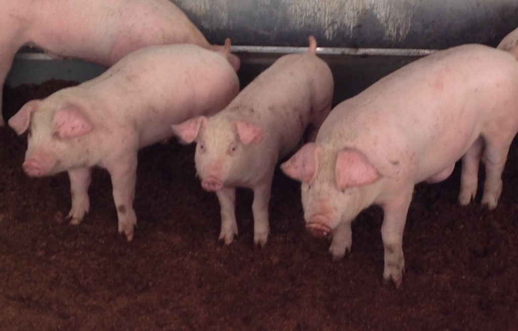 宮崎県経済農業協同組合連合会